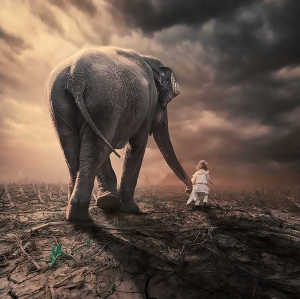 The Little Companion II - Caras Lonut