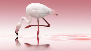 Flamingo By: Doris Reindl